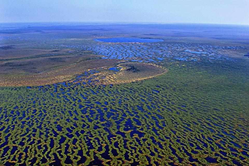 Васюганские болота. Фото с сайта - twitter.com/h0llu0rd