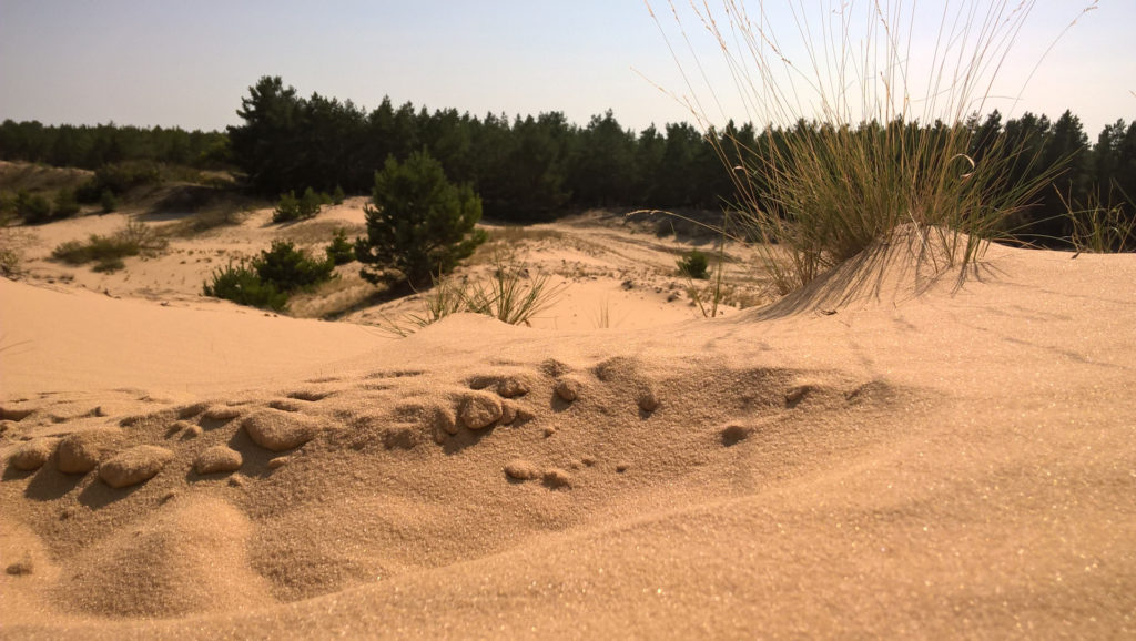 Арчединско-Донские пески, Волгоградская область