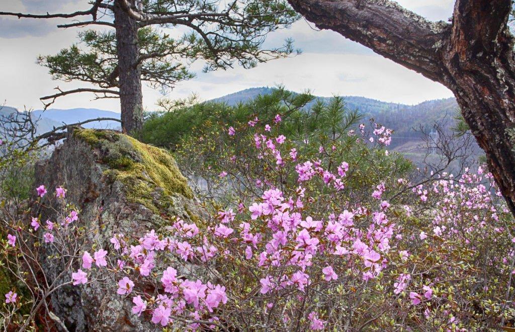 Растения, Сихотэ-Алинский природный заповедник, Приморский край