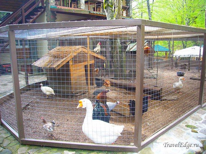 Мини-зоопарк на базе «Холодный ручей», Курорт Горячий Ключ, Краснодарский край