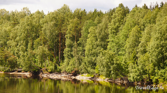 Пейзажи Олонецких лесов, Ленинградская область