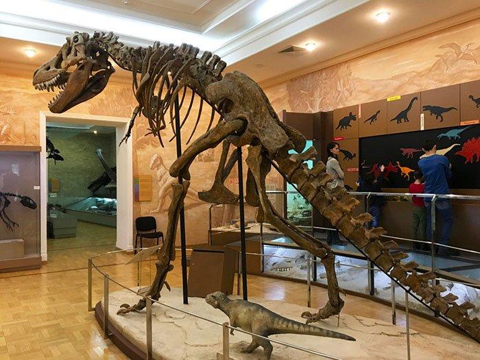 Музей естественной истории Татарстана, Казань