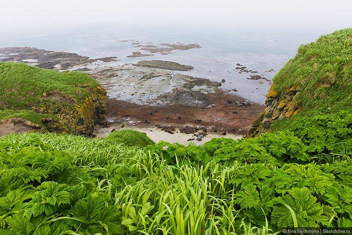 Командорские острова, Камчатский край
