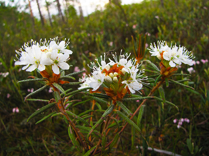 Васюганские болота, растительный мир