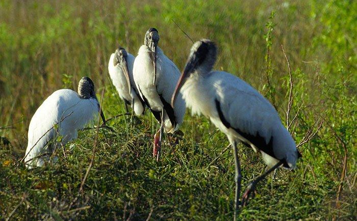 Васюганские болота, животный мир