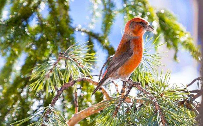 Птицы, Таганай, Челябинская область