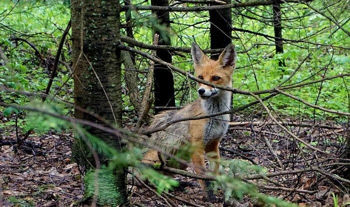 Животные, Таганай, Челябинская область