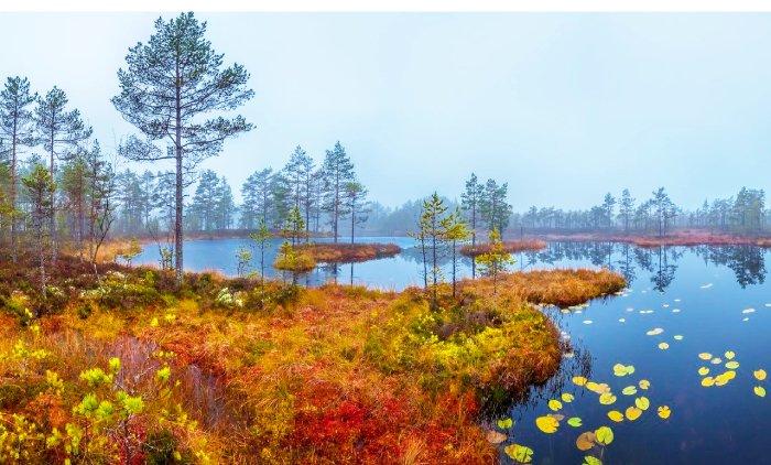 Усинское болото, республика Коми