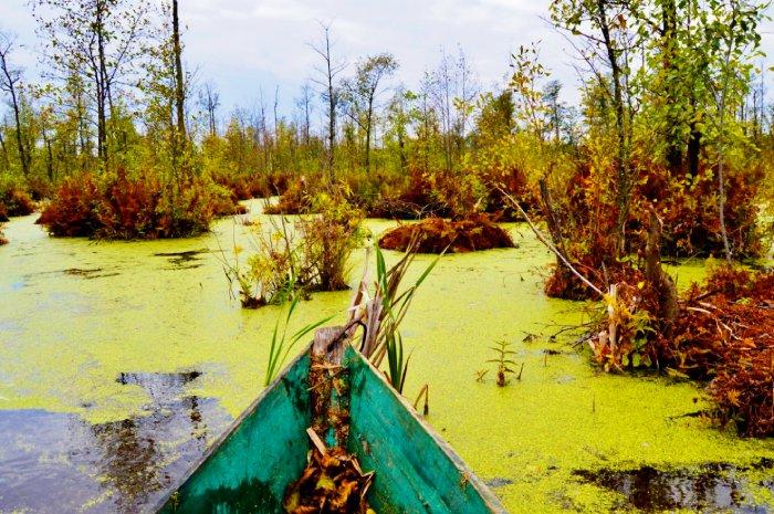 Путешествие по болоте на лодке