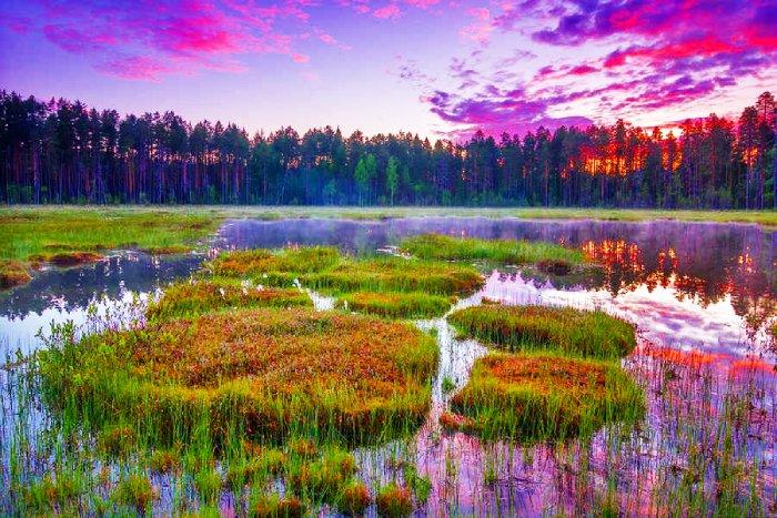 Усинские болота, Коми