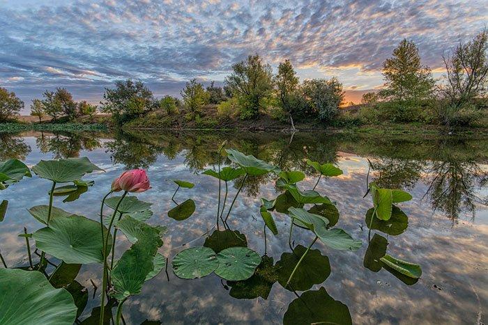 Озеро Лотосов на рассвете, Волгоградская область