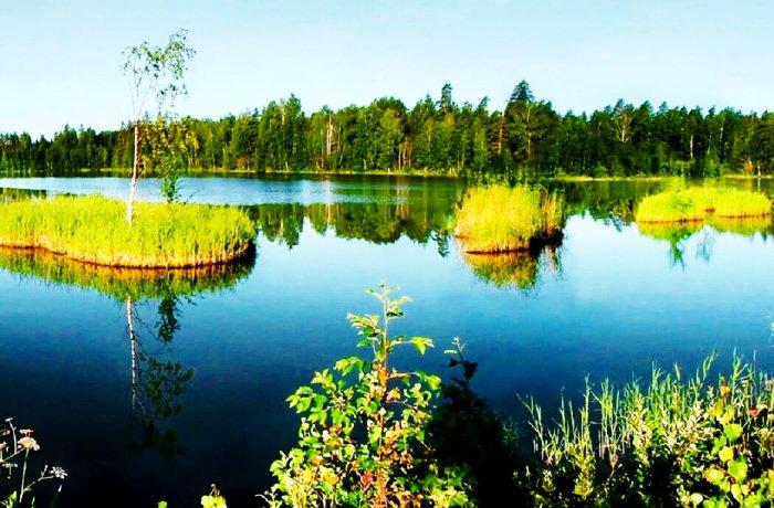 «Уржумский лес», Кировская область. Фото с сайта - irossiya.ru