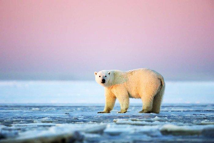 Животные Большого арктического заповедника.