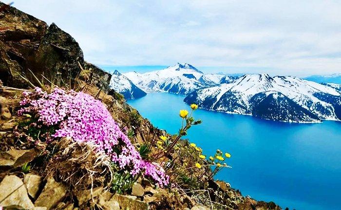 Большой арктический заповедник. Растения. Фото с сайта