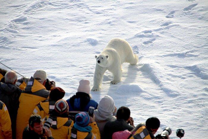 Туристы в Большом арктическом заповеднике