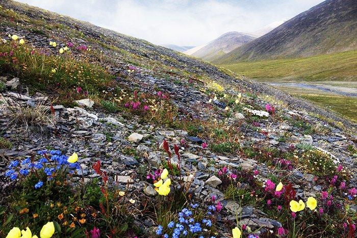 Растительный мир Большого арктического заповедника