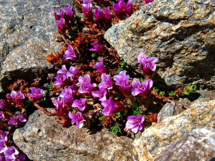 Растительный мир Алтайского заповедника