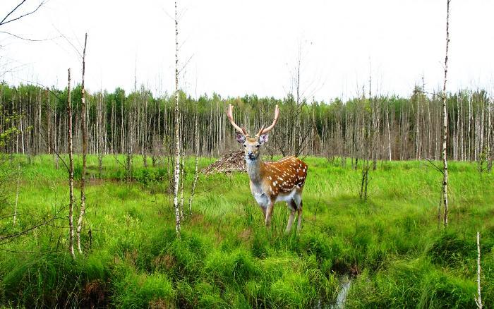 Животный мир Лазовского заповедника