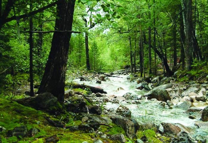 Растительный мир Баргузинского заповедника
