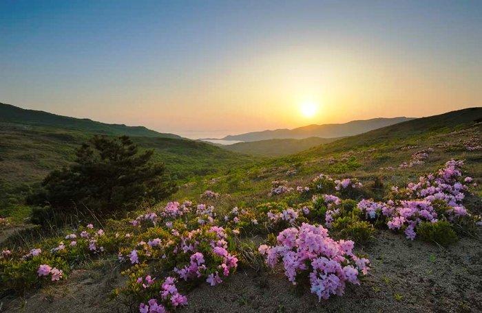 Флора Дальневосточного морского заповедника