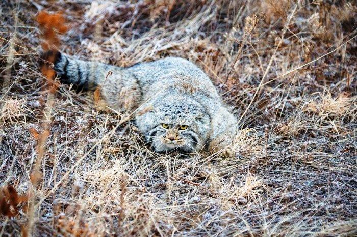 Животные Байкальского заповедника