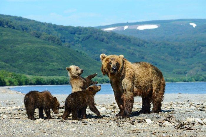 Животный мир Байкальского заповедника
