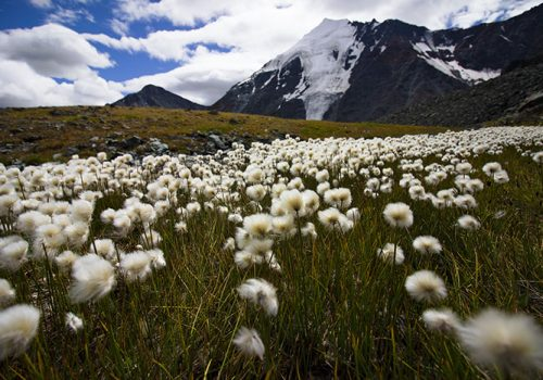Гора Белуха, Алтайский край